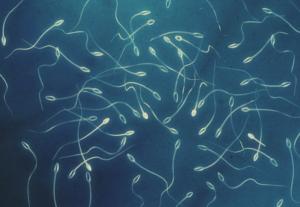 Какие показатели исследуют в анализе спермограмма